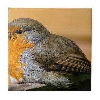 Robin bird on fence. tile