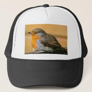 Robin bird on fence. trucker hat