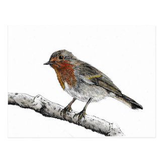 Robin Bird Sketch Postcard