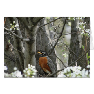 Robin & Bradford Pear Tree Blossoms, Spring Card