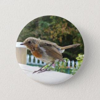 Robin Button Badge