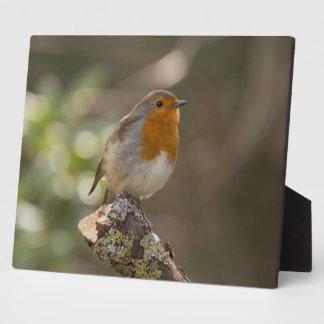 Robin Display Plaques