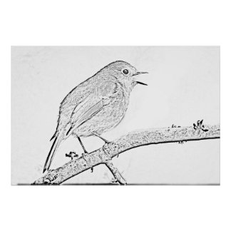 Robin Drawing Print