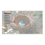 Robin Eggs in a Backyard Tree Nest Pack Of Standard Business Cards