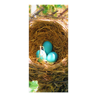 Robin eggs unhatched in a backyard tree nest custom rack cards
