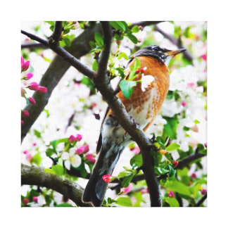 Robin in Blooming Crabapple Tree Print Canvas Stretched Canvas Print