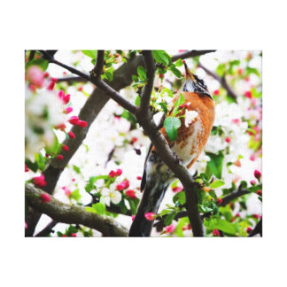Robin in Blooming Crabapple Tree Print Canvas Gallery Wrapped Canvas