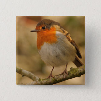 Robin in Sunshine 15 Cm Square Badge