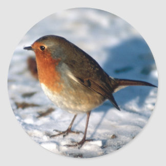 Robin in the Snow Classic Round Sticker