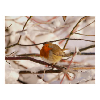 Robin in the winterland (Poster) Poster