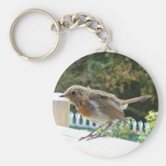 Robin Key Chain