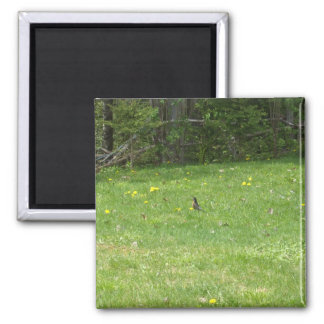 Robin Lawn Scene Magnet