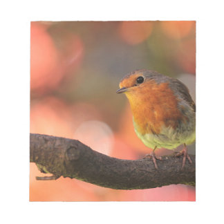 Robin on a branch notepad