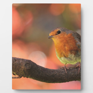 Robin on a branch plaques