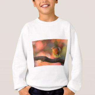 Robin on a branch sweatshirt