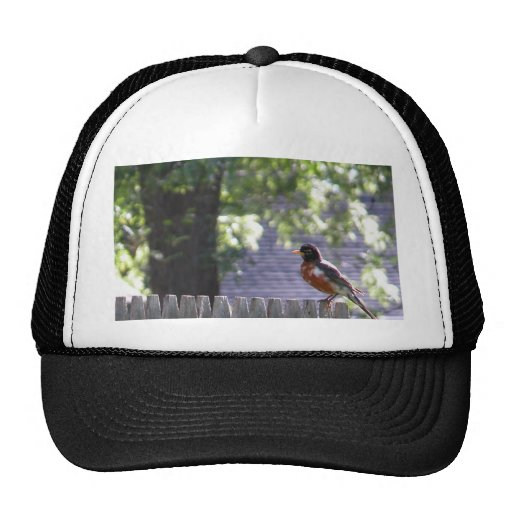 Robin on a fence trucker hat