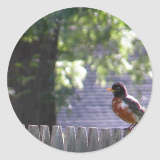 Robin on a fence round sticker