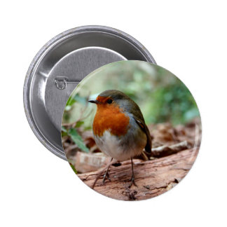 Robin on a limb 6 cm round badge