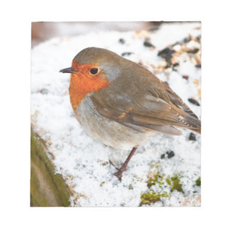 Robin on a snowy log notepad