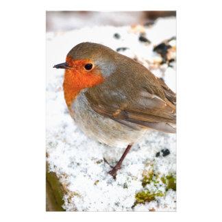 Robin on a snowy log stationery