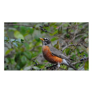 Robin on Berry Bush 2 Pack Of Standard Business Cards