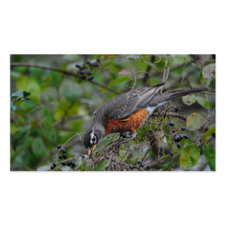 Robin on Berry Bush Eating Berries Pack Of Standard Business Cards