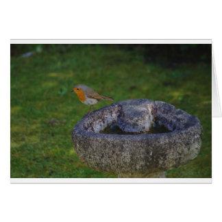 Robin On Bird Bath Card