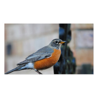 Robin on Ledge Bird Photo Pack Of Standard Business Cards