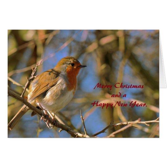 Robin on Tree Christmas Card