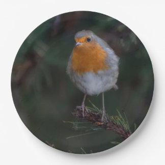 Robin party plate