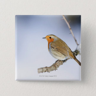 Robin perched on a branch in winter 15 cm square badge