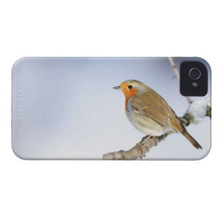 Robin perched on a branch in winter iPhone 4 cases