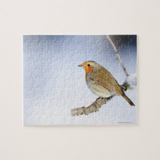 Robin perched on a branch in winter jigsaw puzzle