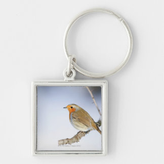 Robin perched on a branch in winter keychains