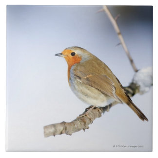 Robin perched on a branch in winter large square tile