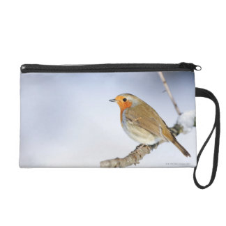 Robin perched on a branch in winter wristlet