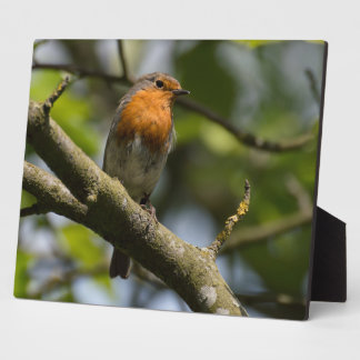 Robin Photo Plaque