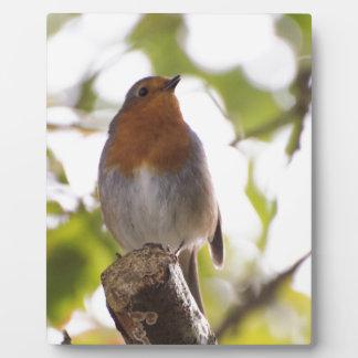 Robin Photo Plaques