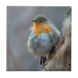 Robin photography small square tile
