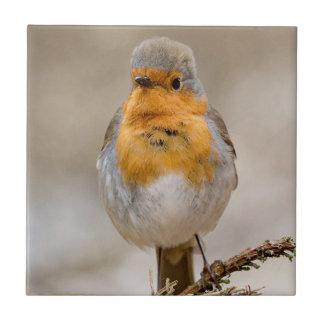 Robin photography tile