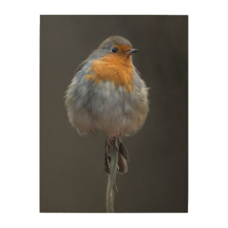 Robin picture wood wall decor