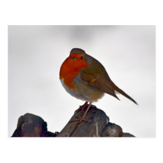Robin Postcard 3