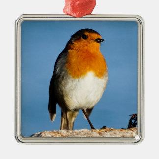Robin red-breast for Premium Square Ornament