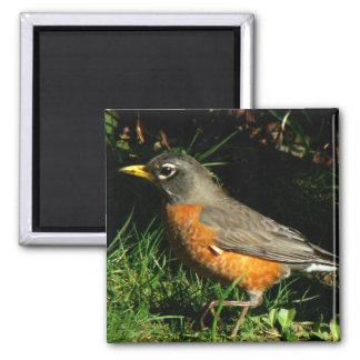 Robin Redbreast Bird Magnet