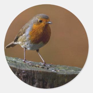 Robin Redbreast Classic Round Sticker