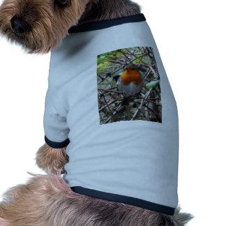 Robin redbreast pet t shirt