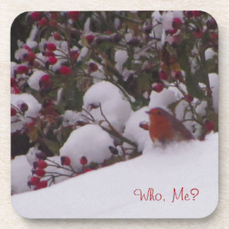 Robin Redbreast in the Snow Coaster