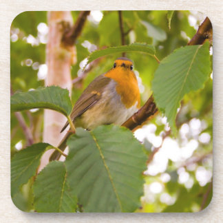"""Robin Redbreast in Wild Cherry Tree"" Coasters"