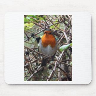 Robin redbreast mousemats