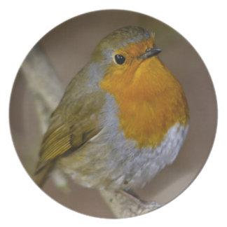 Robin Redbreast Plate